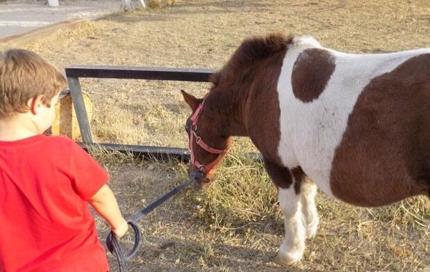 Disfruta de tu pony