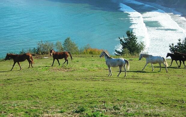 Paseo a caballo entre monte y mar