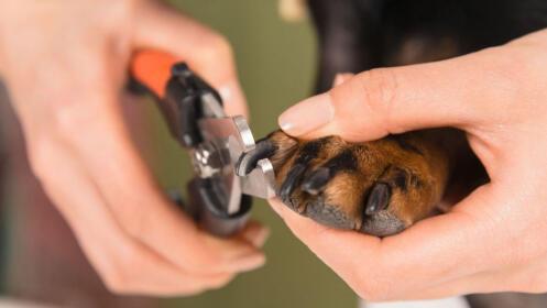 Sesión de corte de uñas para tu perro