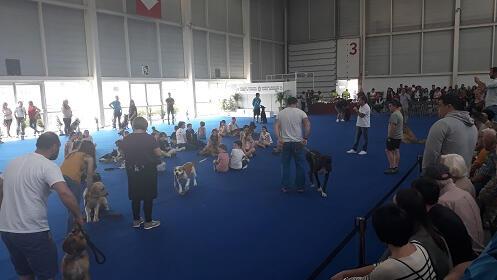 Entradas para la XL Exposición Canina Internacional
