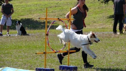 Pack mensual de clases de adiestramiento canino