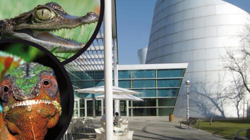Entrada Museo de la Ciencia Eureka! con Animalia + Planetarium